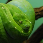 ТОП самых опасных змей мира
