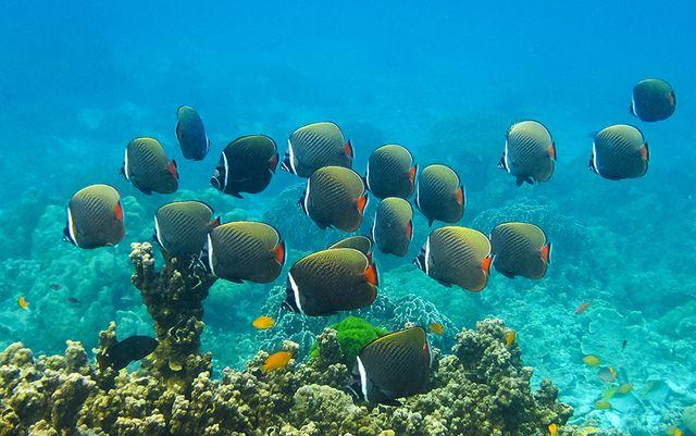 Лучшие коралловые рифы