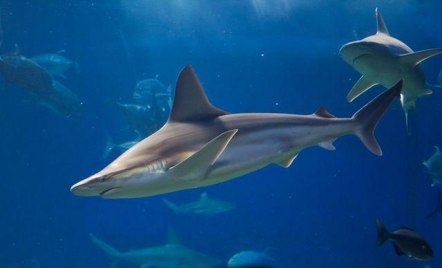 ТОП самых опасных акул мира