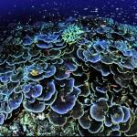 Лучшие коралловые рифы мира