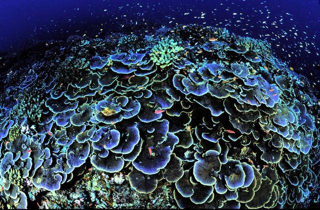 Коралловые рифы, фото