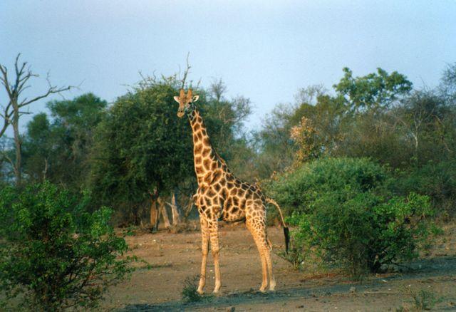 Лимпопо, крупнейший национальный парк мира