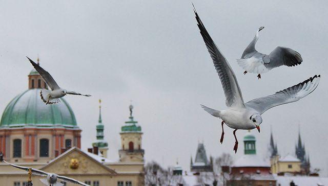 Интересные экскурсии по Праге, Чехия
