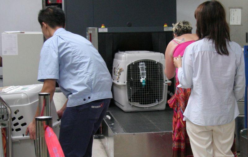 Животные в аэропорту