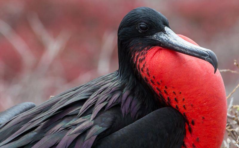 Птицы Галапагосских островов