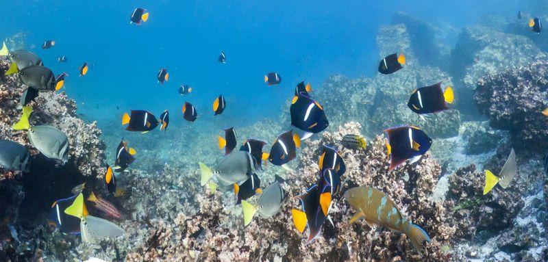 Рыбки Галапагосских островов