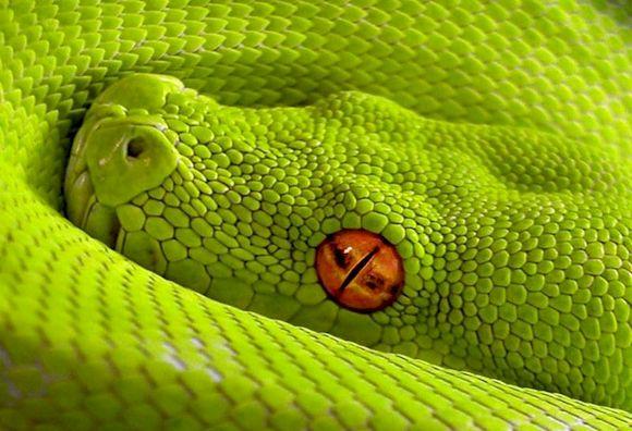 Зеленая змея, фото