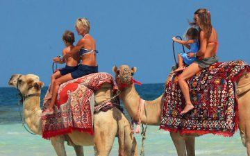 иберостар тунис 5 звезд джерба