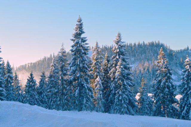 Снег на деревьях в карелии