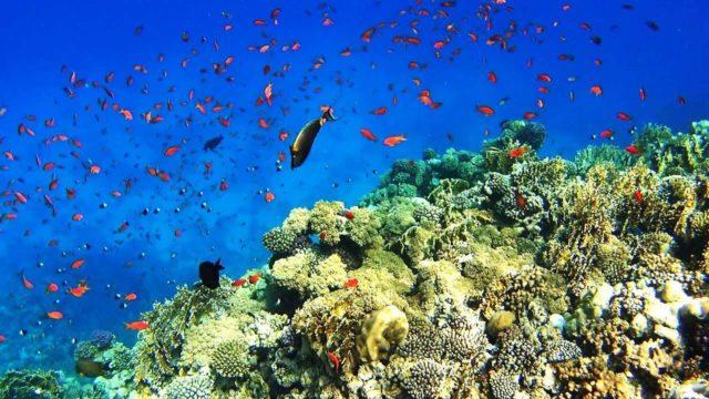 Красное море в Египте