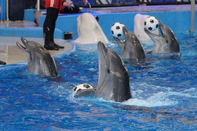 Дельфинарий в Ривьера парк