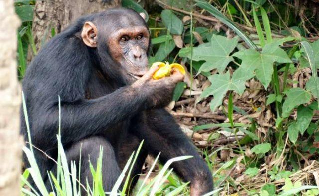 еда у обезьян