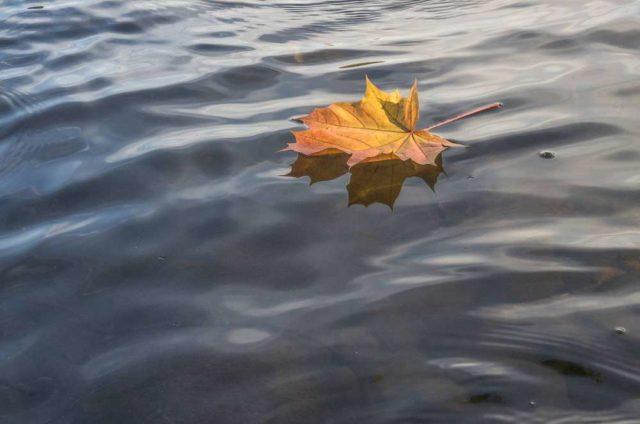 лист в море