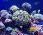Океанариум Адлер