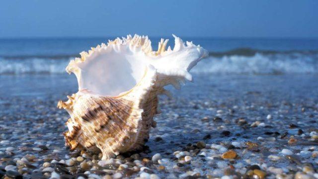 Побережье моря в Сочи