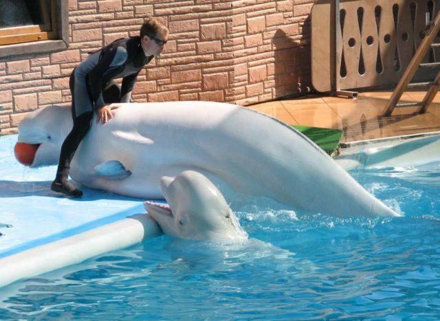 Животные в Дельфинарии