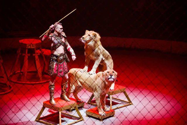 Выступление со львами в цирке