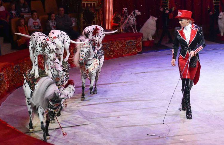 Шоу в цирке Сочи