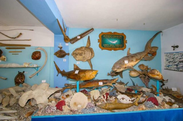Музей морских раковин в Беницес