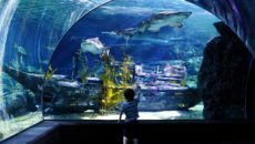 Океанариум Бангкока Sea life ocean world