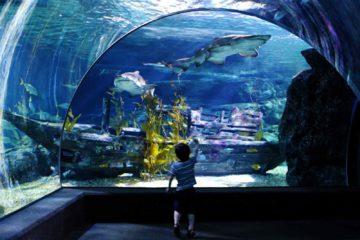 Океанариум Бангкока Sea life ocean world