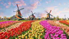 Что посмотреть в Нидерландах из достопримечательностей?