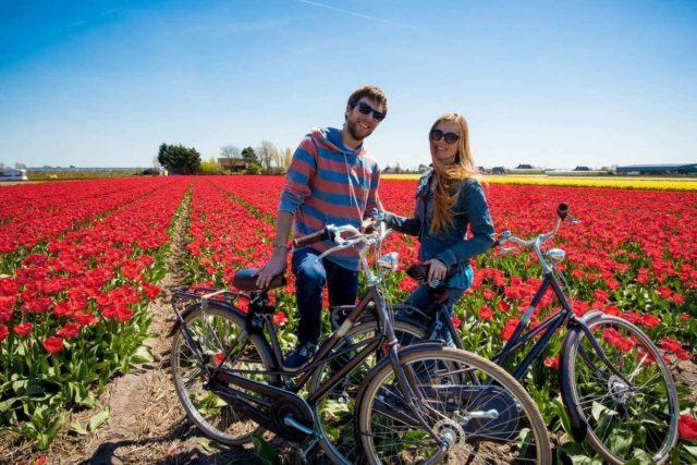 На велосипеде по тюльпановым полям