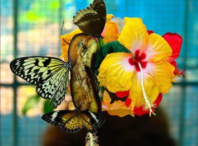Сад Бабочек Пхукета