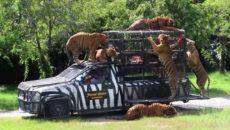 Парк Safari World в Бангкоке