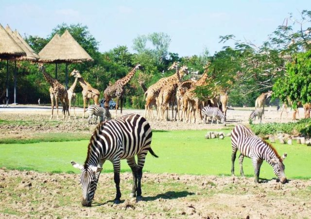 Животные в Сафари парк