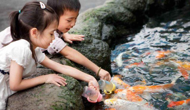 бассейн с рыбками
