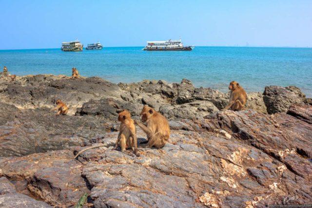 Остров обезьян Ко Пет
