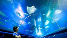Океанариум Underwater World Pattaya в Паттайе