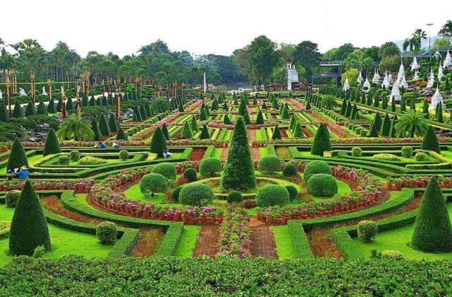 Растения Нонг Нуч