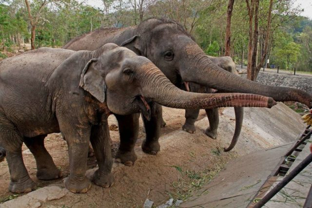Слоны в Кхао Кхео