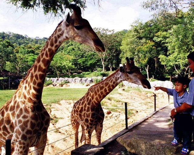 В зоопарке Кхао Кхео