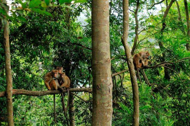 Лесной заповедник Удаватта Келе