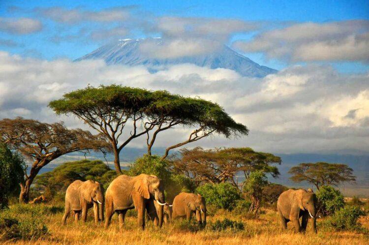 поездка в Танзанию